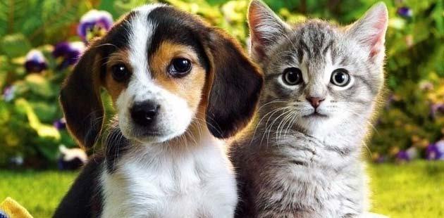 Odluka o uvjetima i načinu držanja kućnih ljubimaca i načinu postupanja s napuštenim i izgubljenim životinjama te divljim životinjama